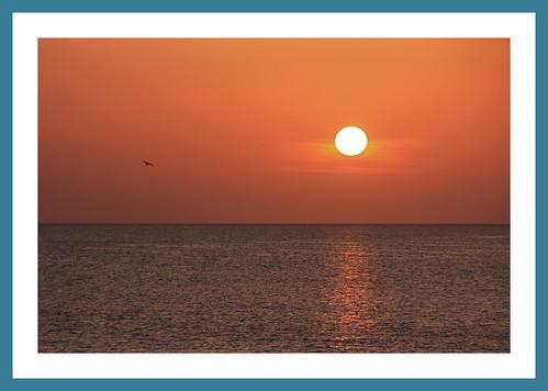 sunset bird scotland spring framed seagull gull moray buckie banffshire portessie