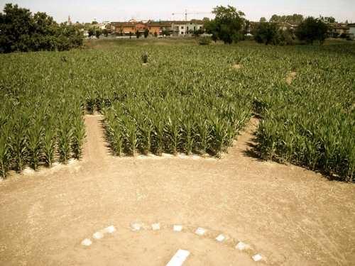 Ad alfonsine ravenna 8 ettari di labirinto per for Labirinto alfonsine