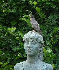 A bird on the head is worth...?