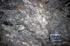 S of Mt Jackson aplite breccia fragments in gabbro breccia