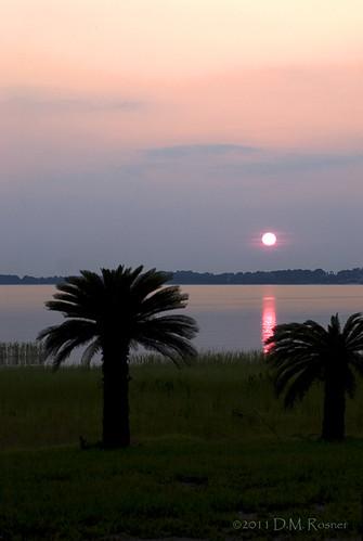 sunset silhouette florida palmtree lakeminneola