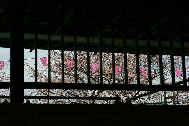 向島春の行楽, Mukohjima Tokyo, Mar 2014. 014