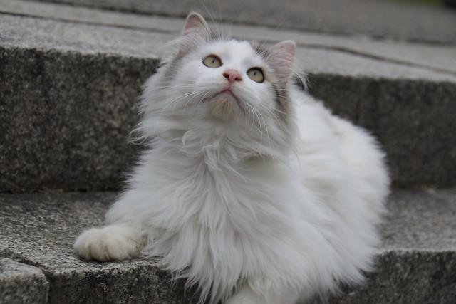 我輩は猫である 2