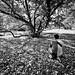 lost in the leaves by Rasidel Slika