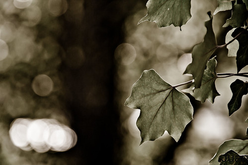 Sweet Leaf.....Lovely Bokeh