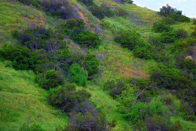 Hillside Spring #4