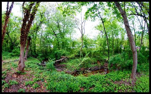 trees summer green water creek newjersey spring nj glassboro pitman borderfx