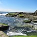 May Day - Beavertail State Park
