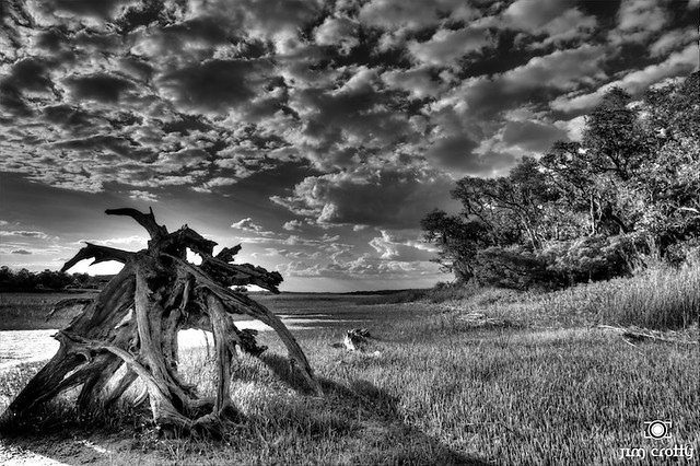 May afternoon on the marshland in black and white by jim crotty