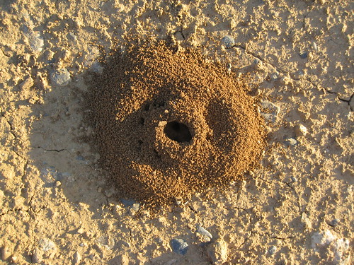 Complex Ant Hill