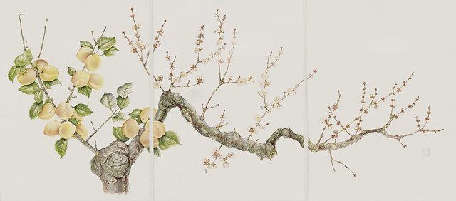 "Carol Hamilton, Triptych of Prunus armeniaca 'Moorpark Improved', 2010. Entrance to Shakespeare Garden. Watercolor on Fabriano hot press. 15"" x 33""."