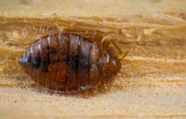 Sample Bed Bug Policy