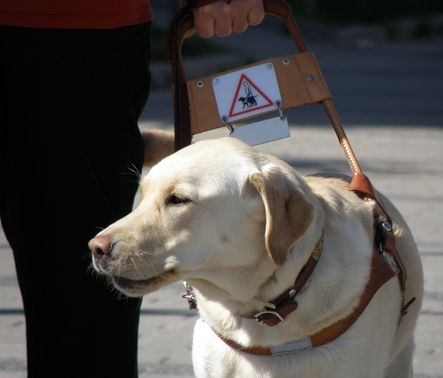 Image Result For Therapy Dogs Training