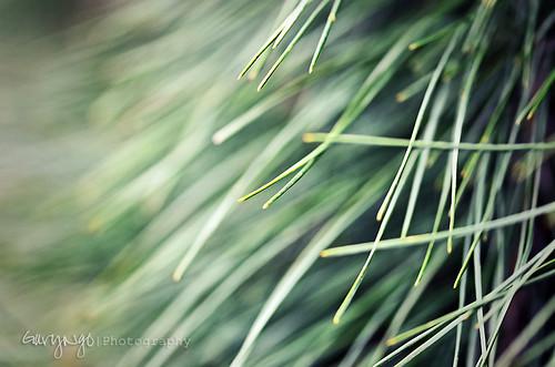 macro green grass closeup nikon dof bokeh maryland shallow brooksidegarden nikkor105mmf28gvrmicro d7000