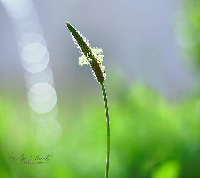 Am I Lonely - Beautiful Bokeh Photography