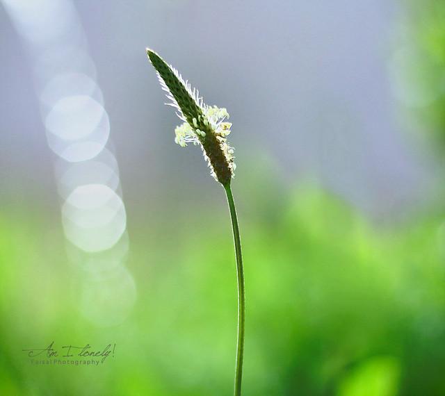 Am I Lonely - Beautiful Bokeh Photography