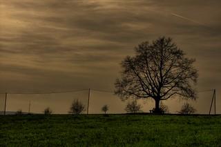 Image of Katharinenlinde. tree dark mood view aussicht baum blick hdr esslingen aussichtspunkt linde katharinen darkmood katharinenlinde