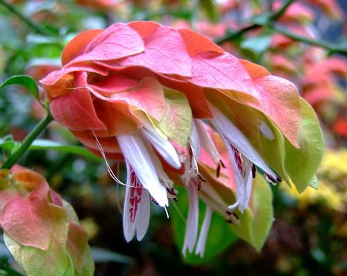 Названия цветов и растений  bdkrru