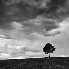 The Lonely Tree II (Final)