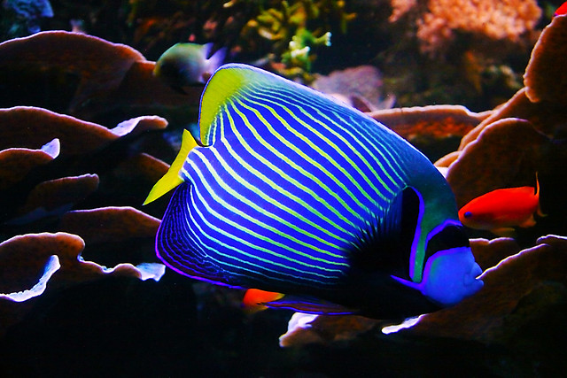Colorful fish flickr photo sharing for Colorful fish pictures