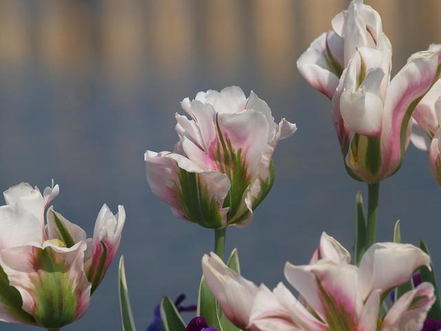 Kew Spring 2011