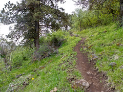 Klamath Ridgeview Trail -  Klamath Falls Mountain Bike Trails