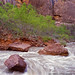 Virgin River, Zion National Park by LionTX