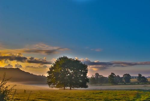 tree sunrise dawn hiking fields hdr villerslaville