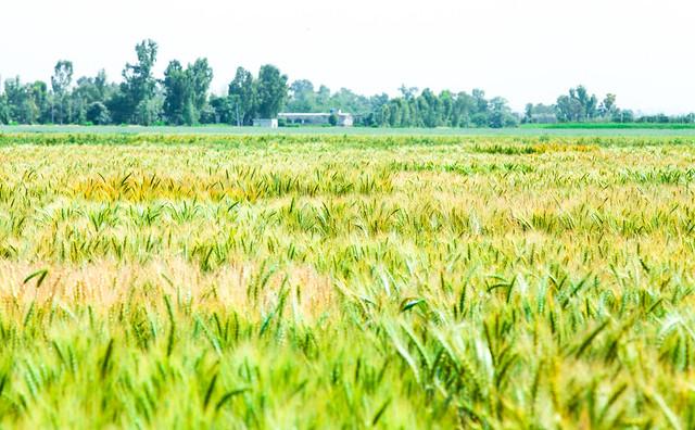 Jeannie Borlaug in Islamabad