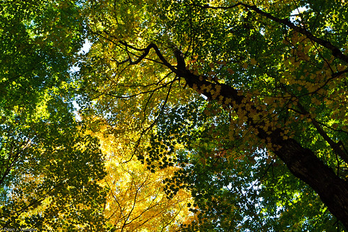 Colorful Fall Canopy