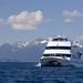 Whale Cruise