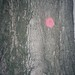tree with pink dot