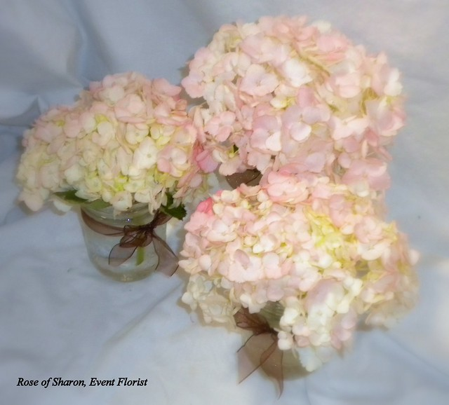 Centerpiece pink hydrangeas flickr photo sharing