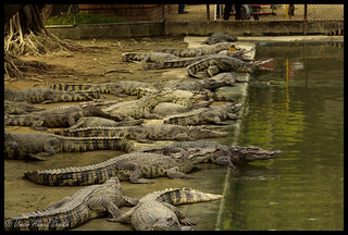 crocodile farm near bangkok