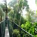 2011.04.23 - Taman Negara and the Jungle Line