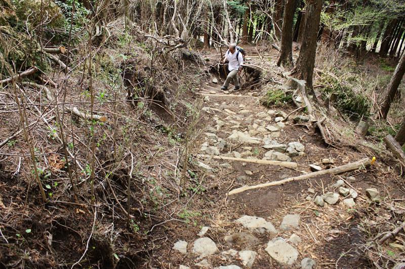 20110429_塔ノ岳(表尾根)_0009