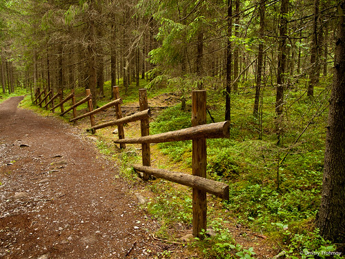 nature forest suomi finland hiking ruovesi helvetinjärvi