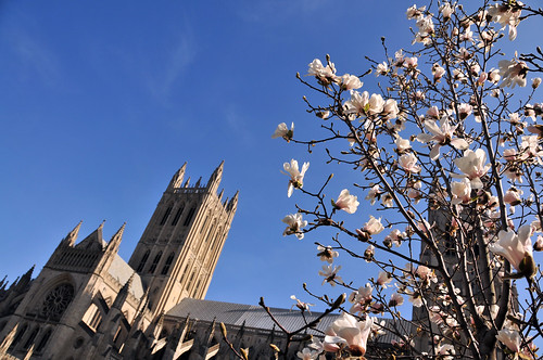 blooms at the cathedral
