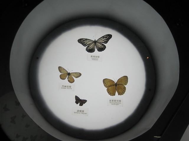 蝴蝶、昆虫类 (4)