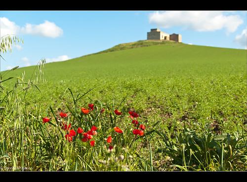 Primavera ad Ummari (TP) - 2