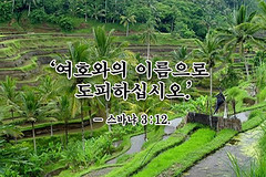 agriculture, farm, field, soil, forest, natural environment, terrace, crop, landscape, elaeis, jungle, biome, vegetation, plantation,