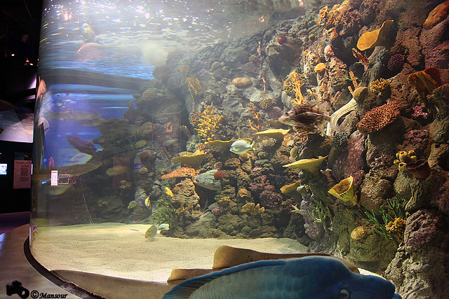 Beautiful large aquarium flickr photo sharing Beautiful aquariums for home