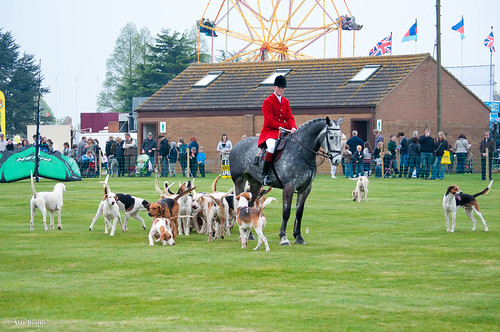 Horse and Hounds