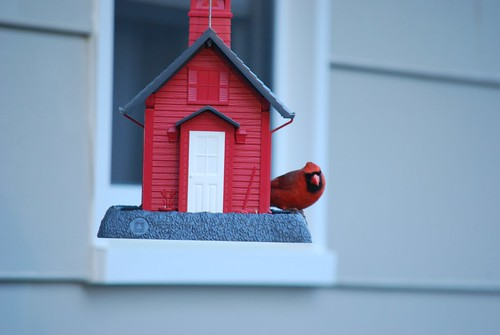 Cardinal feeding by Holocron Photography