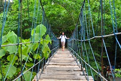 woodland(0.0), flower(0.0), rainforest(1.0), suspension bridge(1.0), leaf(1.0), canopy walkway(1.0), green(1.0), forest(1.0), rope bridge(1.0), natural environment(1.0), jungle(1.0), bridge(1.0),