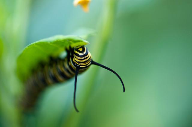 Caterpillar!!