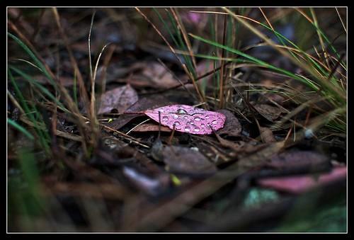 Leaf litter 1