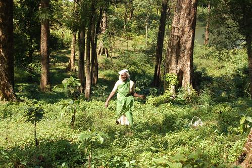 Eine einheimische Gärtnerin in ihrer Kardamomplantage. Alles Grün in Grün.
