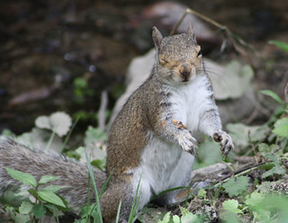 What an expression from this Gray Squirrel - Taken at Armstrong Park in High Point, N.C.
