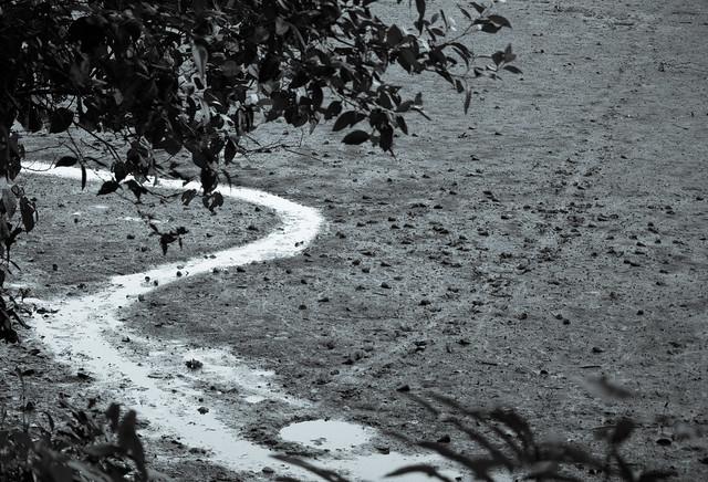 Footprint path to water flickr photo sharing